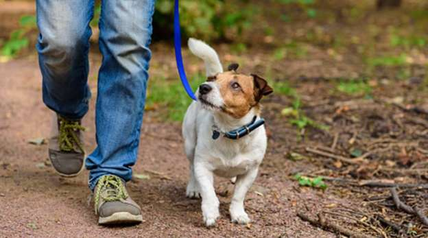 How to walk your pet during self-quarantine
