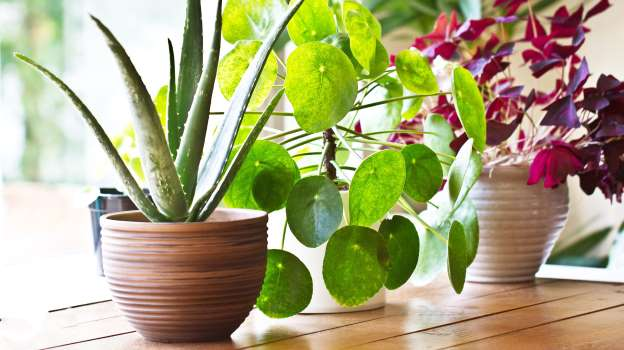 How To Keep An Indoor Plant Alive